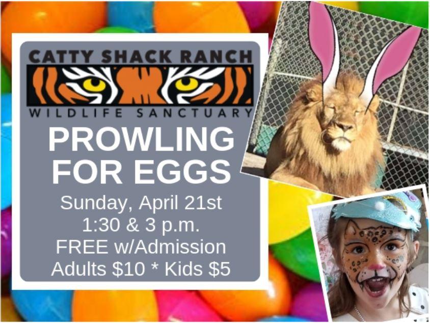 Catty Shack Easter Egg Hunt